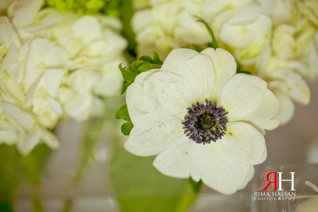Crochet_Flowers_Dubai_UAE_Photographer_Rima_Hassan_0033